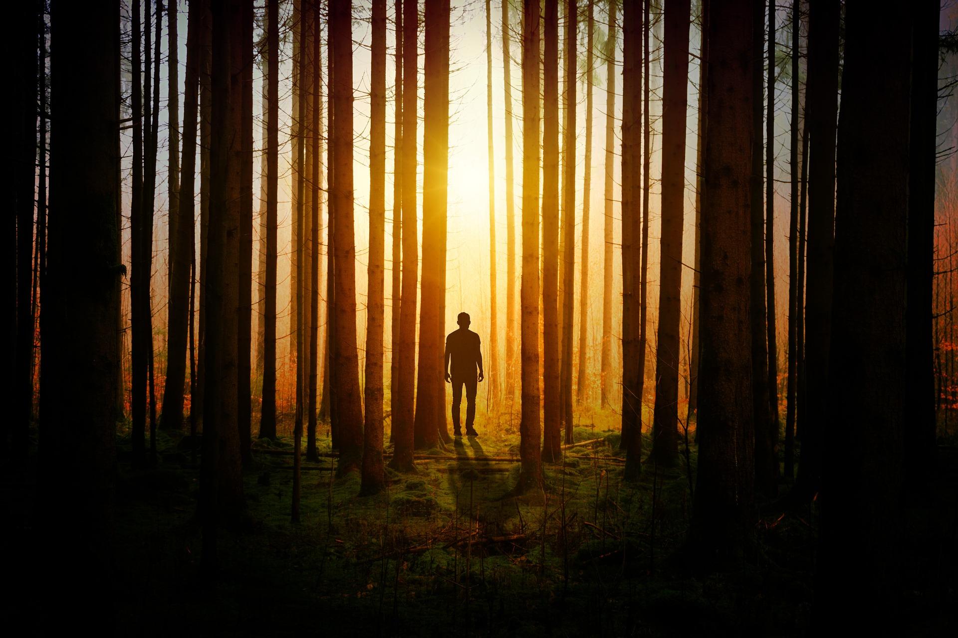 light-trees-wood
